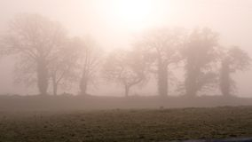 Winter morning in Ireland 2. A foggy misty morning in rural Ireland Stock Photography