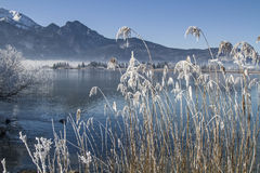 A winter morning at Lake Kochel Stock Image