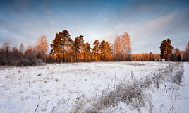 Winter morning landscape Royalty Free Stock Photo