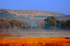 Winter Morning Landscape. Image of an early morning winter landscape with mist from marshlands Stock Images
