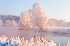 Winter morning landscape. Trees with frost on riversied. Sun illuminates frosty trees and meadow. royalty free stock image