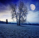 Winter morning with moon Royalty Free Stock Photography