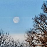 Winter morning moon. Winter morning lunar moon and trees Stock Photography