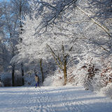 Winter morning in a municipal park Royalty Free Stock Image