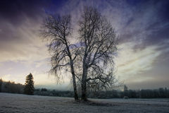A winter morning in nature Stock Photography