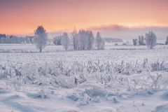 Winter morning nature royalty free stock images