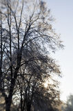Winter morning nature Royalty Free Stock Photos