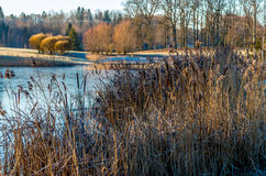 Winter morning by the river. Cold morning at the river with cattails in front Royalty Free Stock Photo