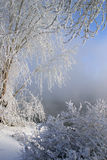 Winter morning on the river Royalty Free Stock Photos