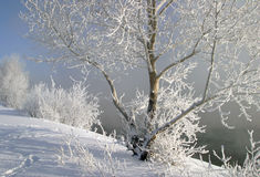 Winter morning on the river Stock Photography