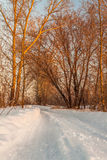 Winter morning Royalty Free Stock Photography
