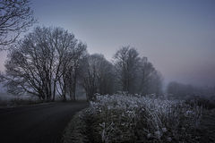 winter morning - road and fog Royalty Free Stock Photo