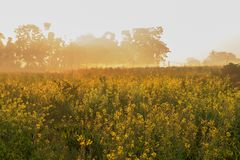 Winter morning scene - rural India. Sun rises in the background, over a green agriculture field. Rural Indian scene. Nature stock image Stock Photo