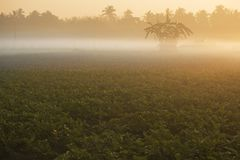 Winter morning scene - rural India. Winter morning - white fog over a green agriculture field with out of frame sun rising in the background. Rural Indian scene Stock Image