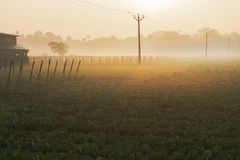 Winter morning scene - rural India. Winter morning - white fog over a green agriculture field with sun rising in the background. Rural Indian scene of sun rise Royalty Free Stock Photography