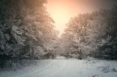 Winter scene at sunrise with warm light. Winter morning scene at sunrise with snow covering landscape and warm light stock image