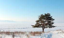 Winter morning scenery Stock Photography