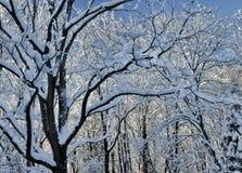 Winter Morning Snow Stock Photos