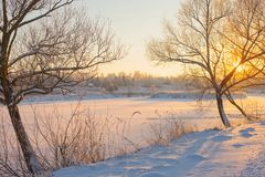 Winter morning with snow and frost. Beautiful winter morning with snow and frost royalty free stock photography