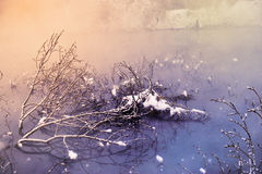 The winter morning Stock Image