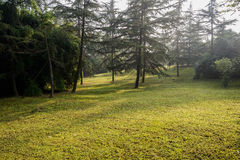 Winter morning sunlight on hillside lawn and trees Stock Image