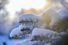 Winter morning. Sunny snowy park stock image
