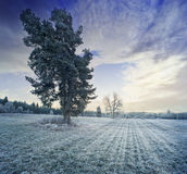 A winter morning Royalty Free Stock Photo