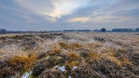 Winter morning sunrise over tussock sods. With hoarfrost in balloerveld nature reserve with frosty heathland Stock Image
