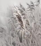 Winter morning in Teufelsmoor near Bremen Germany. At sunrise stock photography