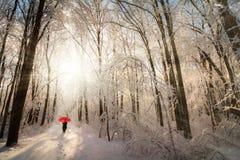 Winter Morning Walk Royalty Free Stock Images