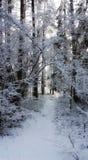 Winter. Morning Walks Royalty Free Stock Photos