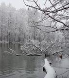 Winter. Morning Walks Royalty Free Stock Photo