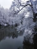 Winter. Morning Walks Stock Images