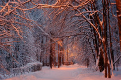 Winter in Moscow park. Russia Stock Image