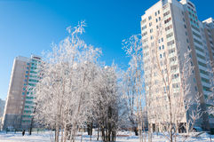 Winter in Moscow, Russia Royalty Free Stock Image