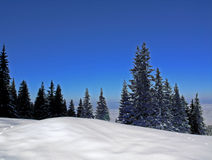 Winter mountain. Crystal clear blue sky, snow and fir wood Royalty Free Stock Photo
