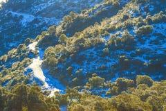 Chrea. Winter in the mountain of chréa, Algeria Royalty Free Stock Photo