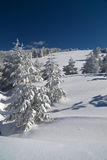 Winter Mountain Day. Sunny winter day - winter mountain scene, Divcibare, Serbia Royalty Free Stock Images