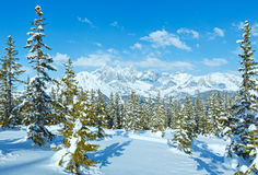Winter mountain fir forest landscape ( Austria)) Royalty Free Stock Images