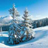 Winter mountain and fir trees Stock Photo