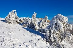 Winter mountain forest Stock Photography