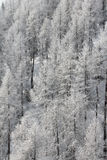 Winter mountain forest Stock Images