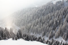Winter mountain forest. Winter snowy mountain forest top view Royalty Free Stock Photography