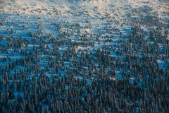 Winter mountain forest royalty free stock photo
