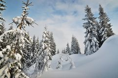 Winter in the mountain forest Stock Images