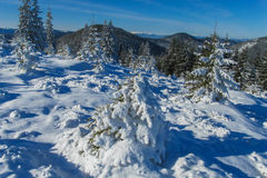 Winter in mountain forest Stock Photo