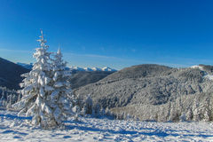 Winter in mountain forest Stock Photography
