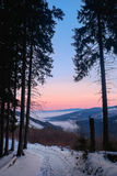 Winter mountain forest with fog at sunrise. Winter mountain landscape with colorful ping sky and mist on background at sunrise. Low light scene Royalty Free Stock Image