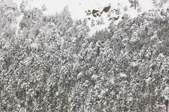 Winter mountain forest snowy landscape. Navacerrada, Spain Royalty Free Stock Photography