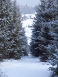 Winter mountain forest. Snowy road. Stock Images